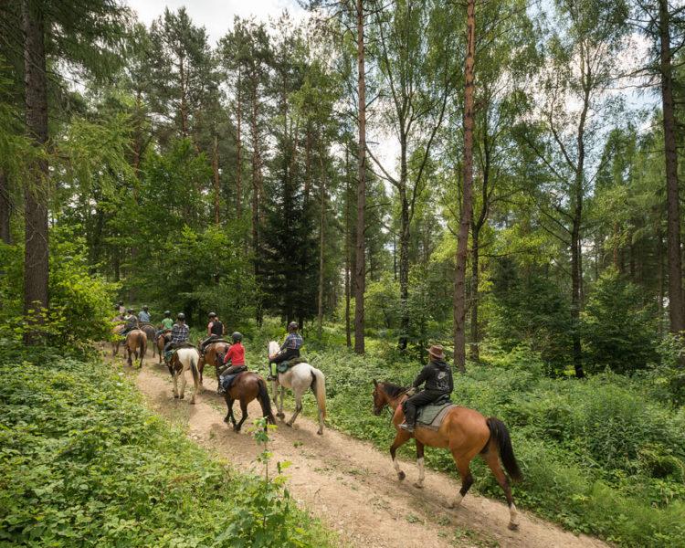 Letnie obozy jeździeckie – komunikat